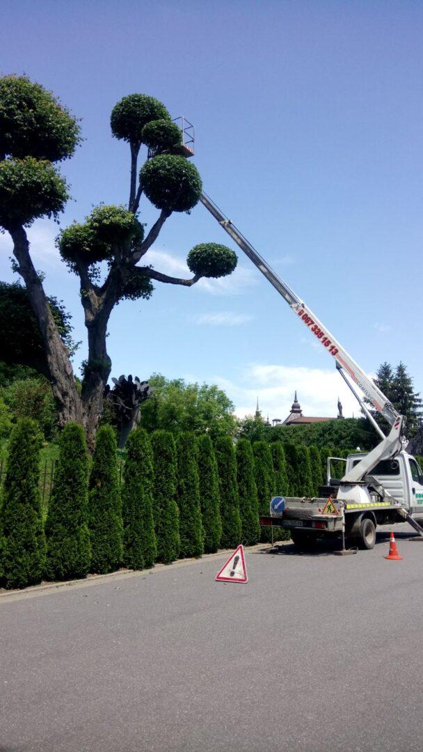 Кронирование деревьев с автовышки